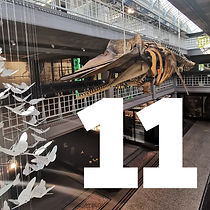 11 December - sperm whale tile 3.png
