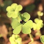 four-leaf-clover-1268581_1920_edited.jpg
