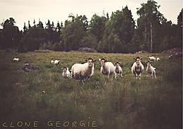 """clone georgie (graphics by C. Neuwirth)"", fotoprint, 2015"