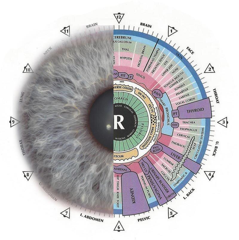 iridologgy+chart+and+eye+half+ans+half.j