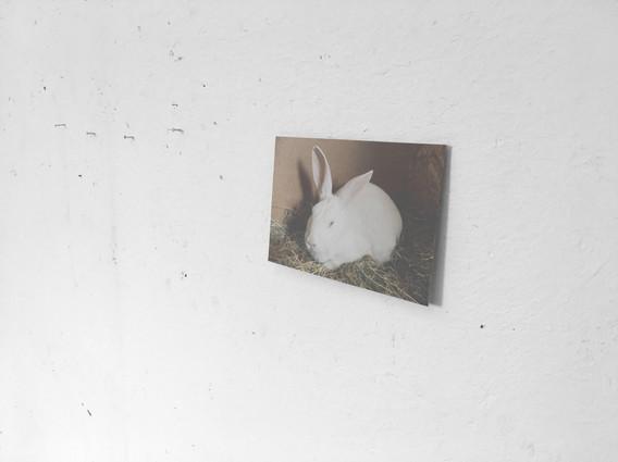 Dit is een foto van Fien, één van mijn huidige atelierkonijnen. De dood van een ander konijn, Simon, heeft er in grote mate toe bijgedragen dat ik het thema vond van waaruit ik nog steeds werk; de cyclus van ontstaan en vergaan.