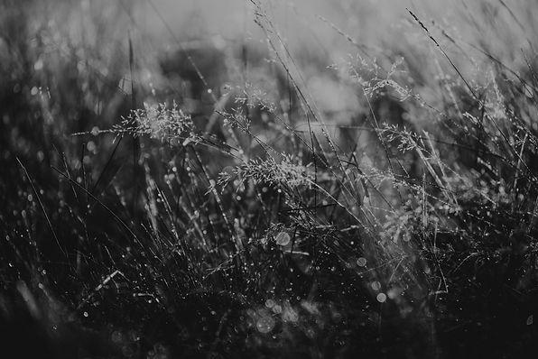 heide-natuur-4864.jpg