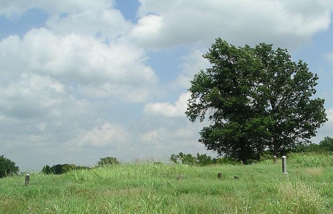 Nowata Tree.jpg