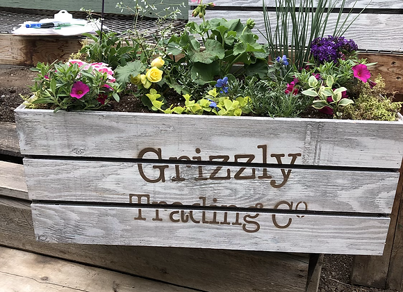 Large Grizzly Box PL0034