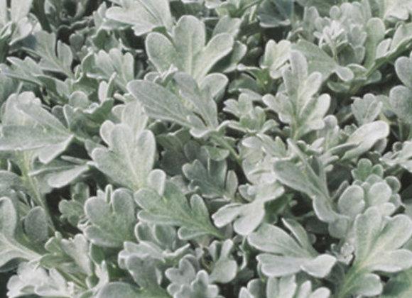 Artemisia, Silver Bullet