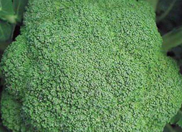 Broccoli, Marathon