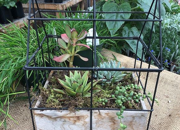 Succulent House PL0101