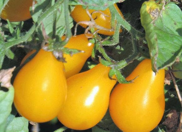 Tomato, Yellow Pear