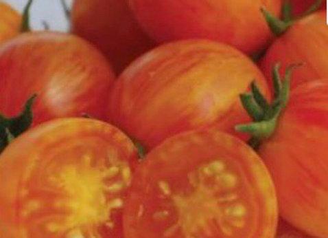 Tomato, Sunrise Bumble Bee