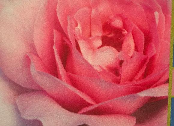 Rose, Beverly