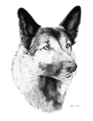 Shepard Portrait.jpg