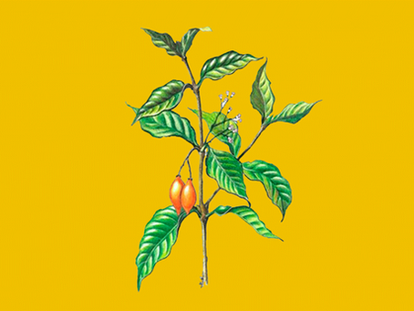 A ibogaína e seus usos atuais no Brasil