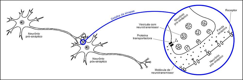 Ilustração de uma sinapse química.