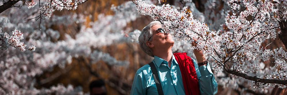 Homem grisalho de camisa azul, óculos escuros, passeando no meio de cerejeiras floridas.