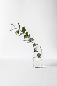 分支在一個玻璃瓶子裡