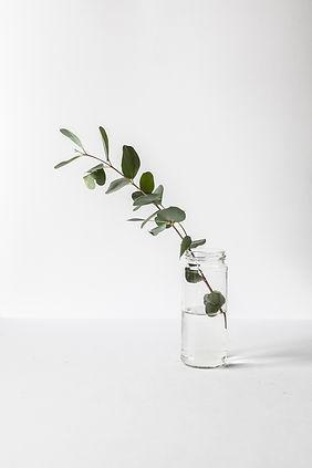 Rama en un frasco de vidrio