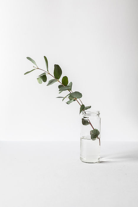 Green leave branch in a glass vase.