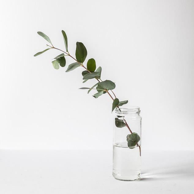 Ramo em um frasco de vidro