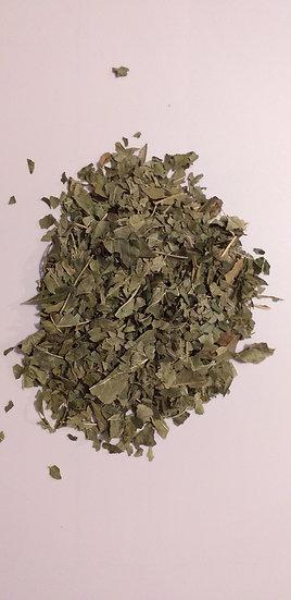 Frêne Fraxinus excelsior (100 g)