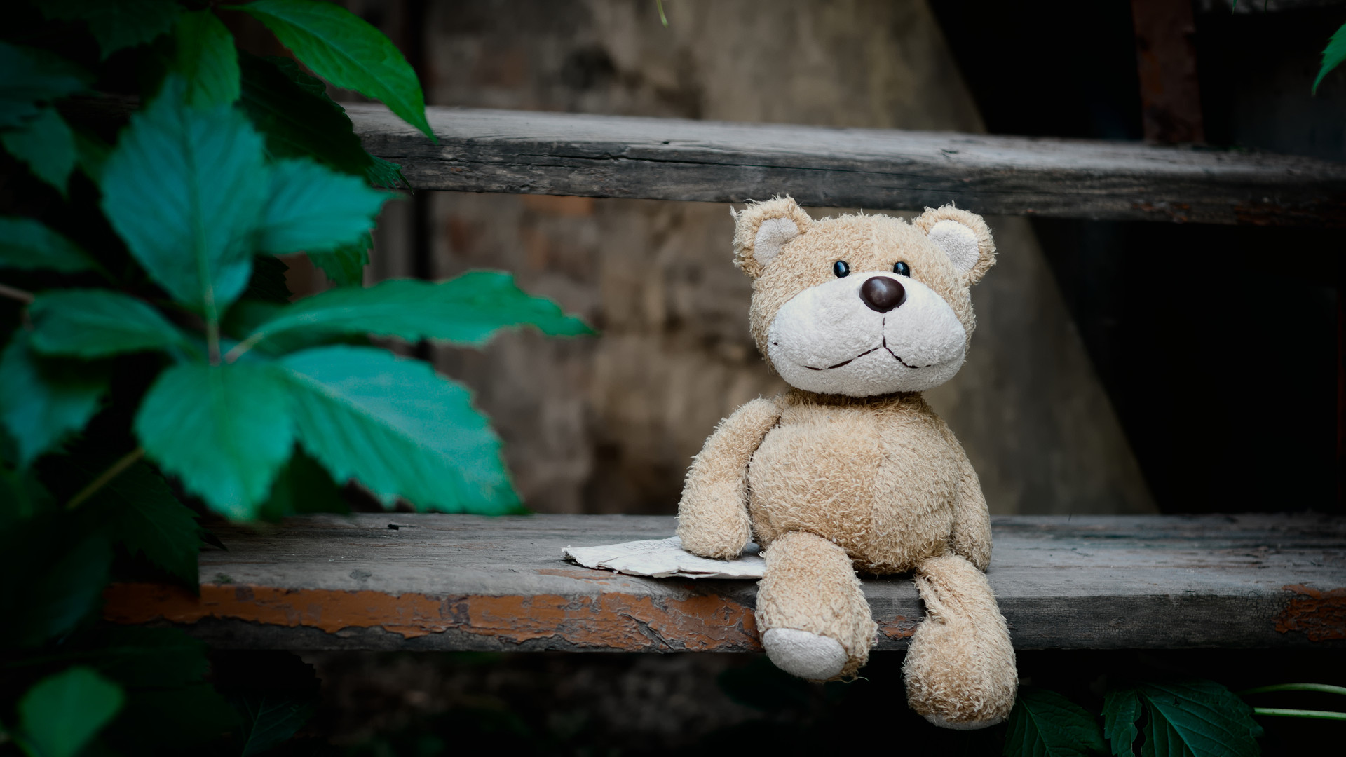 Canva - Brown Bear Plush Toy on Wooden S