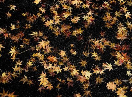 Memory of Kyoto