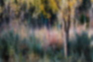 Movement of Colors_20111018_193.jpg