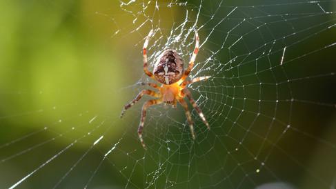 Spinne.jpg