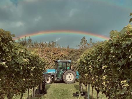 Winemaker Interview: Tommy Grimshaw, Langham Estates