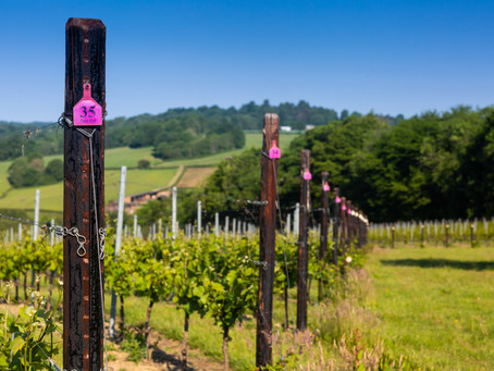 We get to know Busi Jacobsohn, the new English winery on the block...