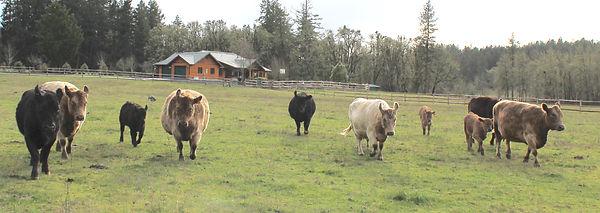 herd22019.jpg