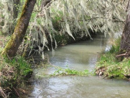 Creek on 4B Station ranch