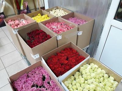 Фото исследование рынка транспортировки цветов