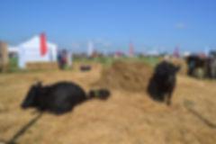 Фото рынка кормов