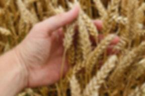 Фото маркетинговые исследования растениеводства