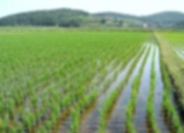 Маркетинговое исследование рынка риса