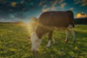 Фото маркетинговые исследования рынков животноводства