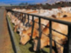 Исследование рынка кормов для животных