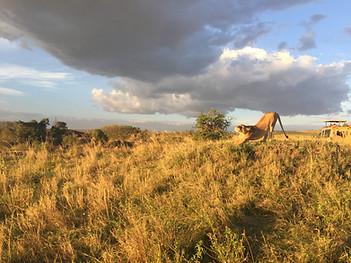 Masai Mara National Park, Kenya October 2016