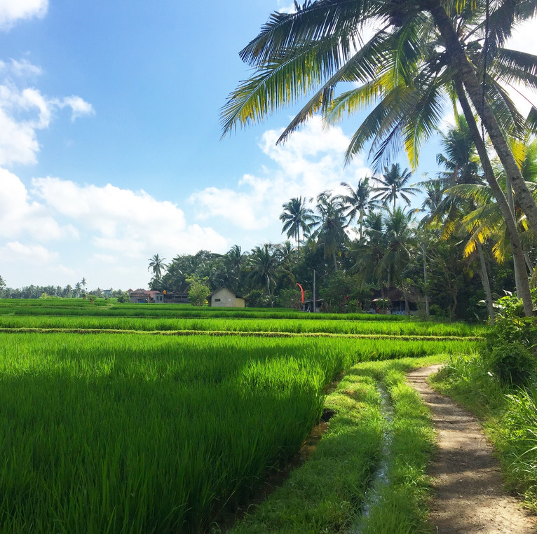 So, um, what's it like to live in Bali?