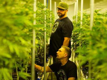 Veterans' grass-roots movement shares health benefits of marijuana