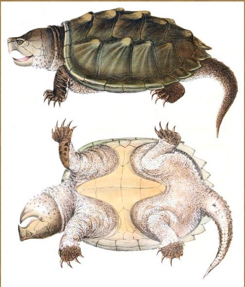 Turtle Day Plan