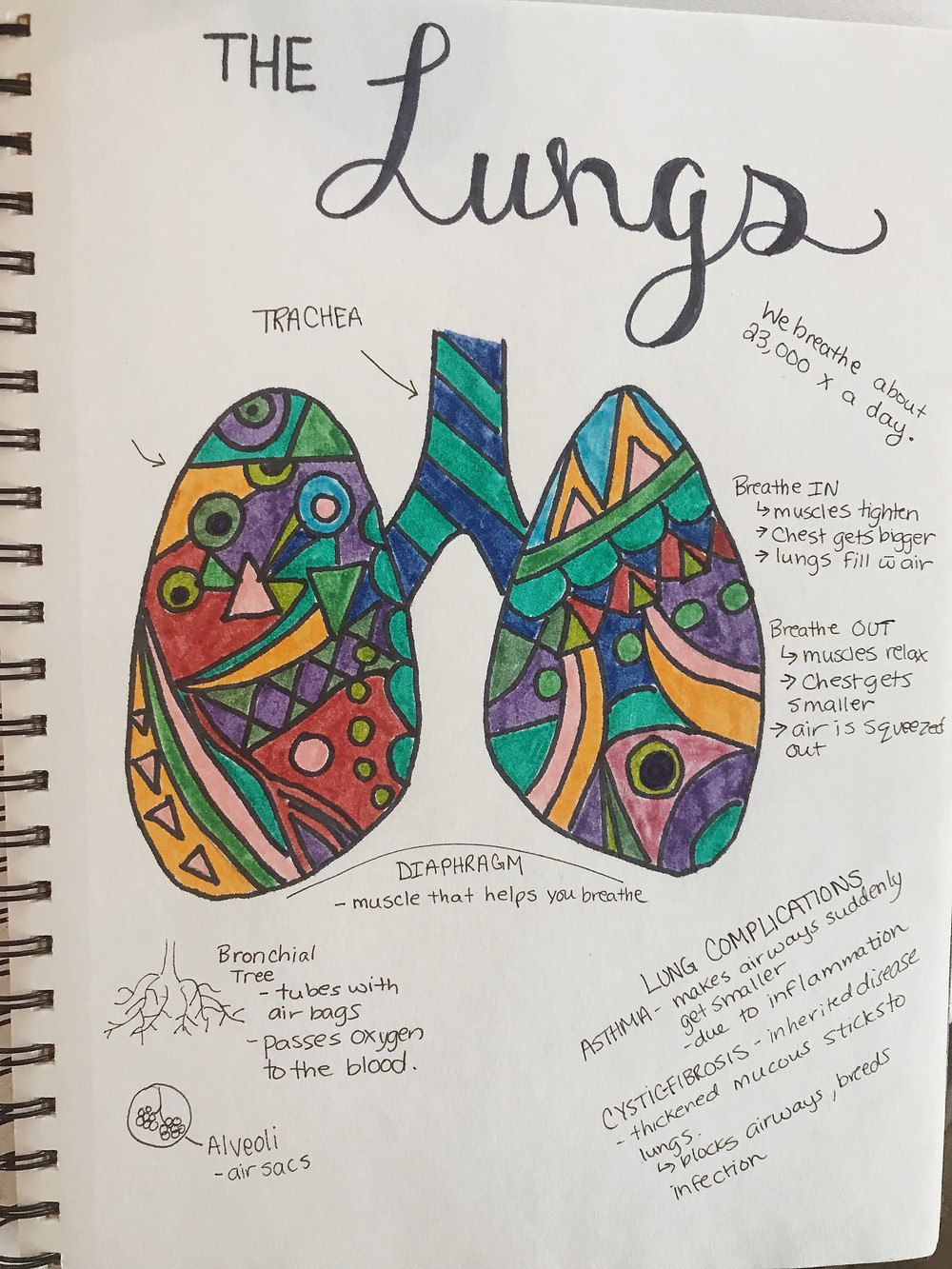 Our abstract lungs from our human body systems studies.