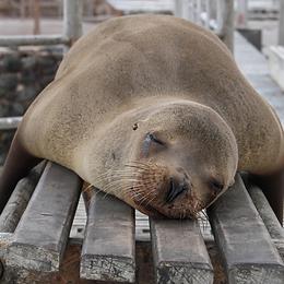 Deep Sleep foca.png