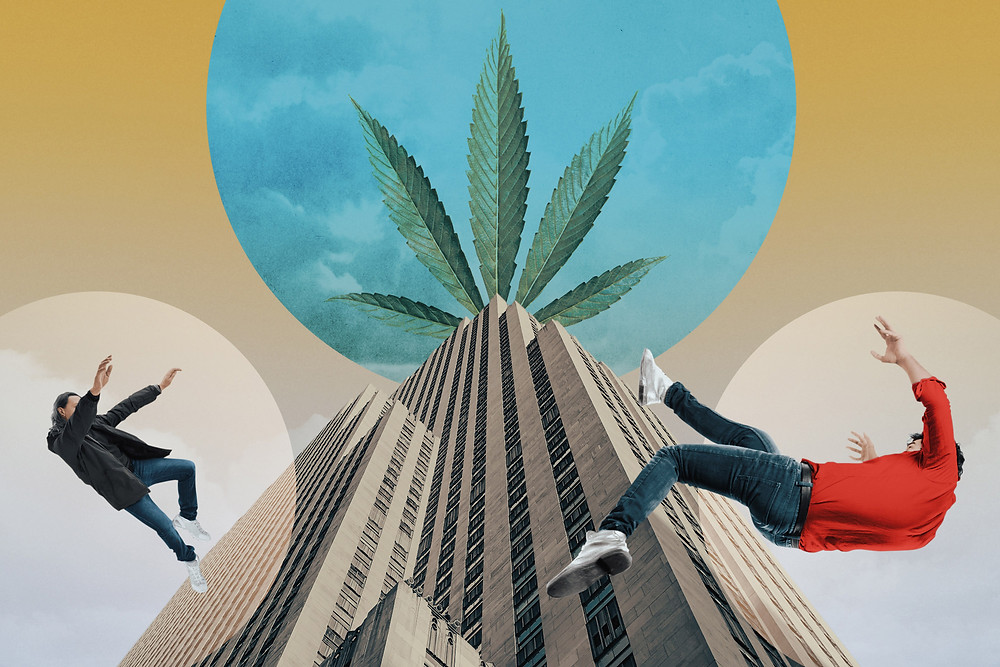 How the 'Apple of Pot' Collapsed