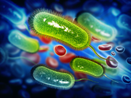 H. pylori Is Found in Over Half the Population - Could It Be Harming You?