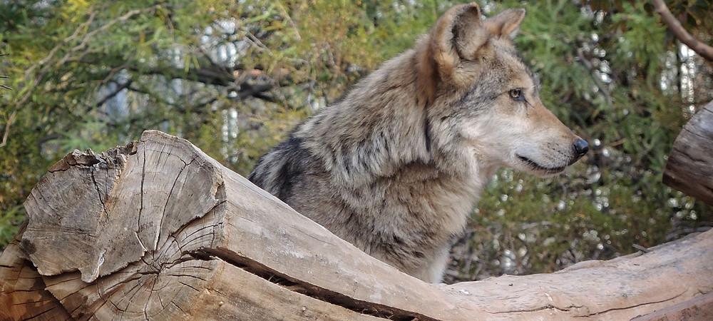 Southwest Wildlife Conservation Center