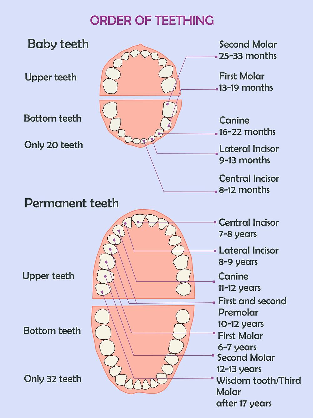 Order of Teething