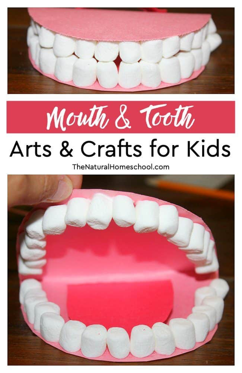 Mouth & Tooth Model Craft: The Natural Homeschool