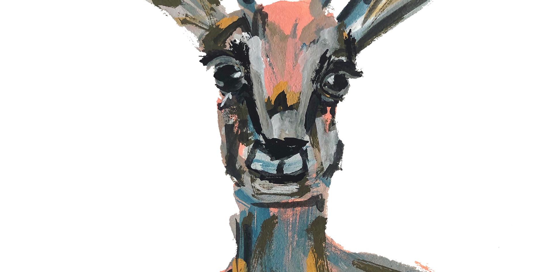 Good Morning Gazelle