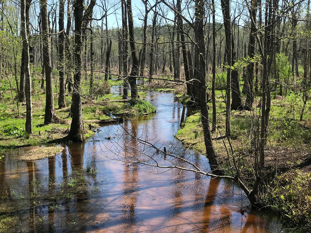 Big Beaver Creek